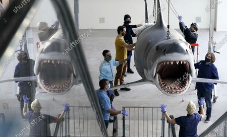 """Fiberglass replica of Bruce, the shark featured in Steven Spielberg's classic 1975 film """"Jaws,"""" is raised to a suspended position for display at the new Academy of Museum of Motion Pictures, in Los Angeles. The museum celebrating the art and science of movies is scheduled to open on April 30, 2021"""