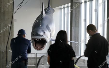 """Stock Picture of Museum workers look on as a fiberglass replica of Bruce, the shark featured in Steven Spielberg's classic 1975 film """"Jaws"""" is raised into a suspended position for display at the new Academy of Museum of Motion Pictures, in Los Angeles. The museum celebrating the art and science of movies is scheduled to open on April 30, 2021"""