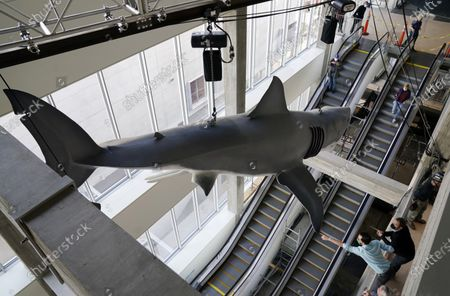 """Editorial photo of """"Jaws"""" Installation at The Academy Museum of Motion Pictures, Los Angeles, United States - 20 Nov 2020"""