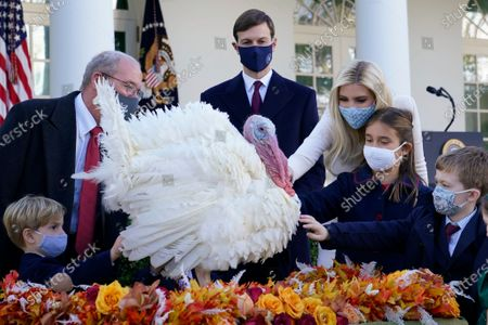 Ivanka Trump, Assistant to the President, third from right, White House adviser Jared Kushner, center, their daughter Arabella Kushner, second from right, and son Theodore Kushner, left, gather around Corn, the national Thanksgiving turkey, in the Rose Garden of the White House, in Washington. President Donald Trump pardoned Corn during the event