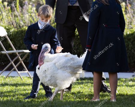 Stock Photo of The son of Ivanka Trump and Jared Kushner, Theodore, greets Corn, the National Thanksgiving Turkey, before President Trump pardoned the bird, at the White House, in Washington, DC, USA, 24 November 2020.