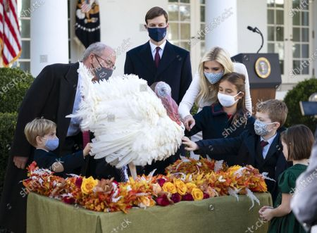 Editorial picture of President Trump Pardons the National Thanksgiving Turkey in Washington, DC, Washington, District of Columbia, USA - 24 Nov 2020
