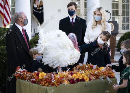 Editorial image of President Trump Pardons the National Thanksgiving Turkey in Washington, DC, Washington, District of Columbia, USA - 24 Nov 2020