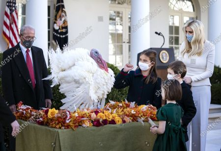 Stock Picture of First Daughter and Advisor to the President Ivanka Trump, and her husband Jarred Kushner joined by their children and other guests greet Corn, the National Thanksgiving Turkey, after United States President Donald J. Trump pardoned the bird in the Rose Garden at the White House.