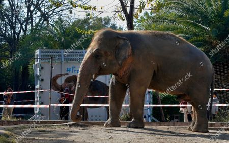 "Photographer takes a picture of an elephant named ""Kaavan"" waiting to be transported to a sanctuary in Cambodia, at the Maragzar Zoo in Islamabad, Pakistan, . Iconic singer and actress Cher was set to visit Pakistan on Friday to celebrate the departure of Kaavan, dubbed the ""world's loneliest elephant,"" who will soon leave a Pakistani zoo for better conditions after years of lobbying by animal rights groups and activists"