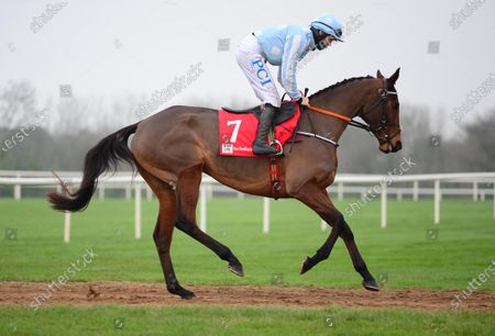 Stock Photo of FAIRYHOUSE 29-November-2020. The Baroneracing.com Hatton's Grace Hurdle (Grade 1) HONEYSUCKLE and Rachael Blackmore head to the start to win for owner Kenneth Alexander and trainer Henry de Bromhead. Healy Racing