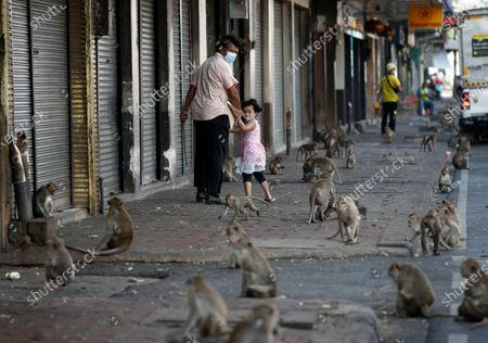 Stock Photo of A Thai man and a girl react as they walk past a street overrun by monkeys during the annual Monkey Banquet festival at the Phra Prang Sam Yod ancient temple in Lopburi province, Thailand, 29 November 2020. The annual gala feast event is hosted on the last Sunday of November to honor the long-tailed macaques for attracting tourists to the town and also promote tourism. Lopburi is well-known as the city of monkeys as the ancient city is overrun by monkeys.