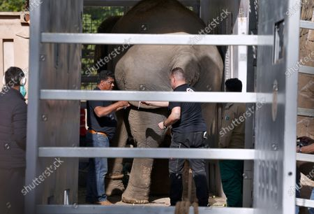 Veterinarians from Four Paws, an international animal welfare organization, inject medicine to an elephant named Kaavan before transporting him to a sanctuary in Cambodia, at the Marghazar Zoo in Islamabad, Pakistan, . Kavaan, the world's loneliest elephant, who became a cause celebre in part because America's iconic singer and actress Cher joined the battle to save him from his desperate conditions at the zoo