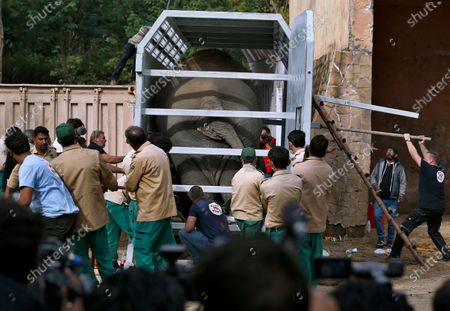 Stock Image of Pakistani wildlife workers and experts from the international animal welfare organization Four Paws, arrange an elephant named Kaavan into a crate before he is transported to a sanctuary in Cambodia, at the Marghazar Zoo in Islamabad, Pakistan, . Kavaan, the world's loneliest elephant, became a cause celebre in part because America's iconic singer and actress Cher joined the battle to save him from his desperate conditions at the zoo