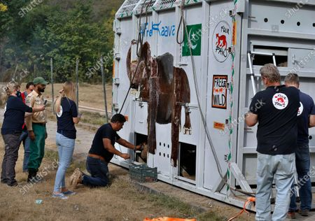 Stock Photo of Dr. Amir Khalil, center, a veterinarian from Four Paws an international animal welfare organization, feeds an elephant named Kaavan loaded in a crate before he is transported to a sanctuary in Cambodia, at the Marghazar Zoo in Islamabad, Pakistan, . Kavaan, the world's loneliest elephant, became a cause celebre in part because America's iconic singer and actress Cher joined the battle to save him from his desperate conditions at the zoo