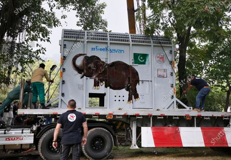 Pakistani wildlife workers and experts from the international animal welfare organization Four Paws, secure a crate carrying an elephant named Kaavan on a truck before transporting him to a sanctuary in Cambodia, at the Marghazar Zoo in Islamabad, Pakistan, . Kavaan, the world's loneliest elephant, became a cause celebre in part because America's iconic singer and actress Cher joined the battle to save him from his desperate conditions at the zoo