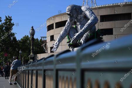 Editorial picture of Sculpture of chimpanzee David Greybeard, Melbourne, Australia - 03 Dec 2020