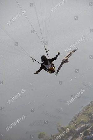 Scott Mason and a tourist flying with an Egyptian vulture during the 'para-hawking' experience he offers