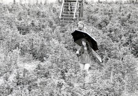 7th Marquis Of Bath - 6th June 1978 Lord Weymouth And Wife Actress Anna Gael At Longsleat In The New Maze....