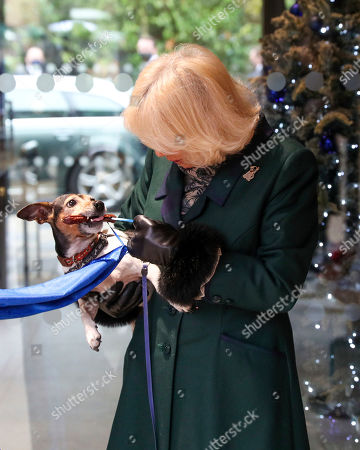 Camilla Duchess of Cornwall with Beth, her jack-russell terrier, visits the Battersea Dogs and Cats Home to open the new kennels and thank the centre's staff and supporters.