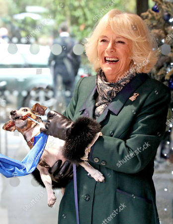 Camilla Duchess of Cornwall with Beth, her jack-russell terrier, unveiling a plaque as they visit the Battersea Dogs and Cats Home to open the new kennels and thank the centre's staff and supporters.