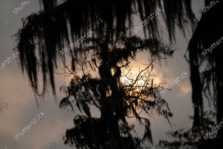 Setting sun is seen through Cypress Trees and Spanish Moss in the Maurepas Swamp in Ruddock, La., . Located about 35 miles (56 kilometers) west of New Orleans, between Lake Pontchartrain and Lake Maurepas, the swamp takes on a different hue as autumn changes to winter, with much of the foliage temporarily decaying, but still retains its unique beauty and tranquility