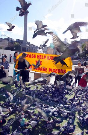 Editorial image of Pigeon Protector Susan Fletcher Pictured With Protesters At Trafalgar Square In London After The Council Decided To Make It Illegal To Feed The Pigeons In The Area.