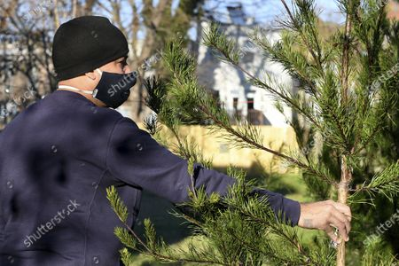 Rei Alvarez, of Richmond, picks out a tree at Frank Pichel's (not pictured) tree lot, in Richmond, Va. A Virginia man has found a way to use Charlie Brown-style Christmas trees to benefit a middle school that provides scholarships for students from an impoverished area