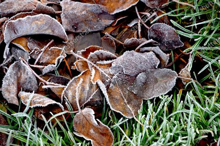 Stock Photo of Jack Frost works his magic on New Years Eve in the Thames estuary town of Gravesend in Kent.