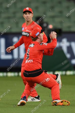 Tom O'Connell of the Stars catches the ball to claim a wicket; Melbourne Cricket Ground, Melbourne, Victoria, Australia; Big Bash League Cricket, Melbourne Stars versus Melbourne Renegades.