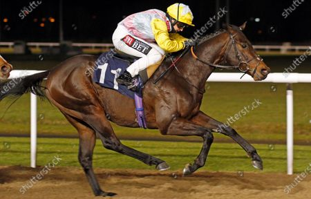WALLEM (Hayley Turner) wins The Betway Maiden Stakes Wolverhampton