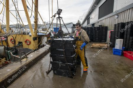 JUST WHEN WE THOUGHT THAT FOR THEM, THE BREXIT WAR WAS OVER... FOR four tempestuous days and nights the trawler Sam of Ladram had been scooping up cuttlefish, 20 miles off our South-West coast. By Thursday morning the storm had abated, and I watched its five crew offload the inky catch known as 'black gold' in these parts in their home port of Brixham, Devon.  Crew from fishing boat â€oeSam of Ladram†unload a valuable catch of cuttlefish which sells to Italy and Spain. The ship is based in Brixham, Devon. After Brexit, Wholesaler Ian Perks†business has seen a steep reduction in orders and an increased paperwork load to sell to European buyers.