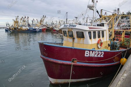 JUST WHEN WE THOUGHT THAT FOR THEM, THE BREXIT WAR WAS OVER... FOR four tempestuous days and nights the trawler Sam of Ladram had been scooping up cuttlefish, 20 miles off our South-West coast. By Thursday morning the storm had abated, and I watched its five crew offload the inky catch known as 'black gold' in these parts in their home port of Brixham, Devon.  Some of the fishing fleet in Brixham, Devon. After Brexit Ian Perks wholesale business has seen a steep reduction in orders and an increased paperwork load to sell to European buyers.