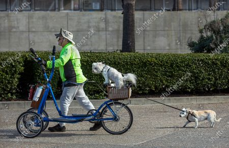 Jose Perez, 77, and his dogs Tina, 10, center, a poodle/mix, and Twiggy, 14, a chihuahua/mix, make their way along a bike path at Santa Monica Beach on a cold and windy day. Perez, said that he normally rides his bicycle, called a street strider, but because of the wind picking up, it was becoming too hard to stay on it safely. (Mel Melcon / Los Angeles Times)