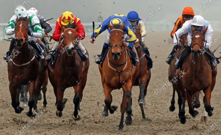 Stock Image of SUPERCONTANGO (2nd right, James Sullivan) beats MAHALE (right) ZEN DANCER (2nd left) and RAINBOW'S PONY (left) in The Play Ladbrokes 5-A-Side On Football Maiden Stakes Lingfield