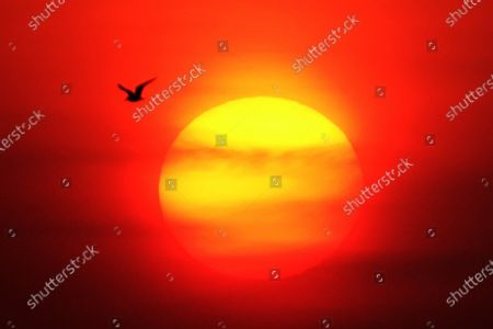 On February 3, 2021, the brilliant morning glow reflected on the sea area of Dalian Bay. Seagulls flying against the rising sun, eulosizing the beginning of a new cycle of solar terms. On that day, the first of the 24 solar terms, the Start of Spring, marks the beginning of a new cycle of all living things.
