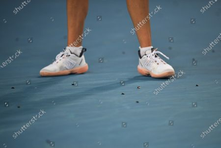 Ajla Tomljanovic standing surrounded by bugs on Margaret Court Arena during her second round match