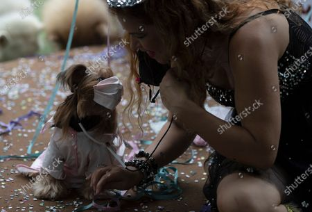 Stock Photo of Eva, dressed in a doctor costume, sits with her owner on a stage peppered with confetti during the annual dog Carnival parade in Rio de Janeiro, Brazil, . Rio's Carnival festivities were canceled due to the new coronavirus pandemic, but pet lovers from around the city gathered for the tradition that drew participants with their furry, four-legged companions to compete for best costume