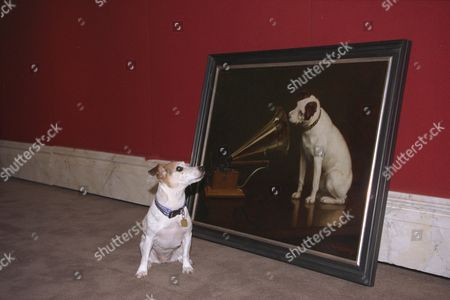 Photocall Blue Cross Animals Art Exhibition Dog Editorial Stock