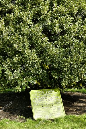 The commemorative tree to celebrate the marriage of HRH Duke of York to H.S.H The Princess Victoria of Teck in 1893