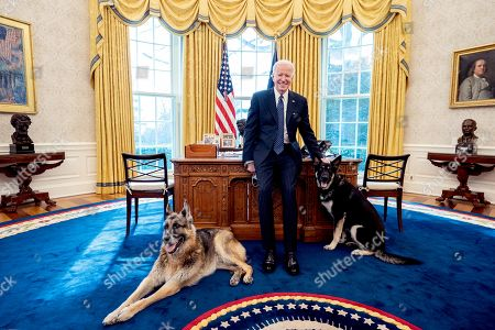 Obituary - Biden Family announces death of beloved German Shepherd Champ
