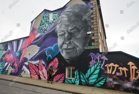 A woman wearing a face mask walks by a mural of David Attenborough by the artist collective SUBSET seen on the side of a property in south Dublin during Level 5 Covid-19  lockdown. On Wednesday, February 24, 2021, in Dublin, Ireland. (Photo by Artur Widak/NurPhoto)