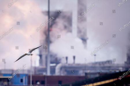 Dozens of residents of Tata Steel are suing the steel factory in IJmuiden for deliberately damaging human and animal health. On their behalf, lawyer Bénédicte Ficq will file a complaint with the Public Prosecution Service against the legal entities and (former) managers of Tata Steel