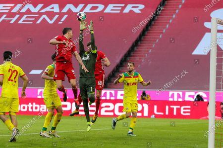 Stock Image of Robert Lewandowski #9 (FC Bayern Munich), Timo Horn #1 (1. FC Koln), Leon Goretzka #18 (FC Bayern Munich)