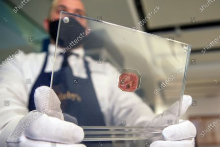 Sotheby's art handler Dustin Marino holds up a British Guiana One-Cent Magenta stamp in New York on . The auction house projects the stamp from the collection of fashion designer Stuart Weitzman will sell for 10 to 15 million dollars when auctioned in June