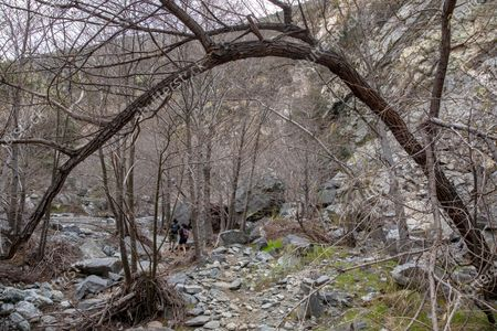 Stock Image of A large tree trunk bends over the trail on the Bridge to Nowhere on Thursday, Feb. 11, 2021 in Azusa, CA. (Brian van der Brug / Los Angeles Times)
