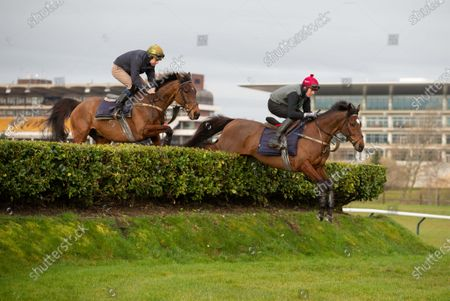 Stock Image of CHELTENHAM. TIGER ROLL ( AT FRONT ) jumping the bank with rider Keith Donaghue during exercise this morning