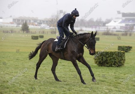 CHELTENHAM. Ruby Walsh on dual winning Cheltenham Gold Cup horse Al Boum Photo on Gold Cup day.