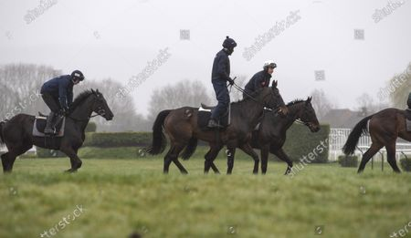 Stock Picture of CHELTENHAM. Willie Mullins horses and riders arrive on the gallops. Al Boum Photo and Ruby Walsh in centre.