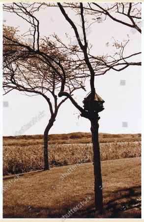 Stock Photo of Trees on parched field.