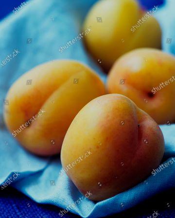 Four plumcots, a half apricot - half plum fruit, arranged in the folds of a light blue towel.