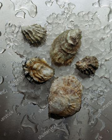 Oysters, clockwise from top left: Kumamoto, Pacific, Olympia, European flat and Eastern.