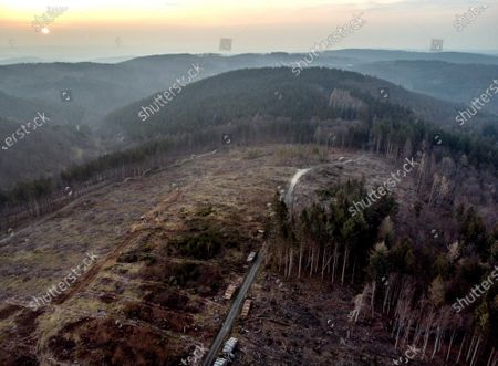 Stock Image of Cleared forest is seen in the Taunus region near Frankfurt, Germany, . Damage caused by the bark beetle and a storm made it necessary to clear large swathes of the German forest
