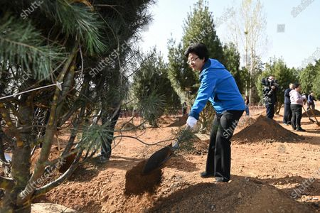 (210330) - BEIJING, March 30, 2021 (Xinhua) - Li Bin, vice chairperson of the National Committee of the Chinese People's Political Consultative Conference (CPPCC), plants a tree during a voluntary tree-planting activity at the Xishan National Forest Park in Haidian District of Beijing, capital of China, March 30, 20 021. Chinese political advisors on Tuesday attended a voluntary tree-planting activity in Beijing. The event was attended by vice chairs of the CPPCC National Committee and more than 100 staff members of the working bodies of the CPPCC National Committee.