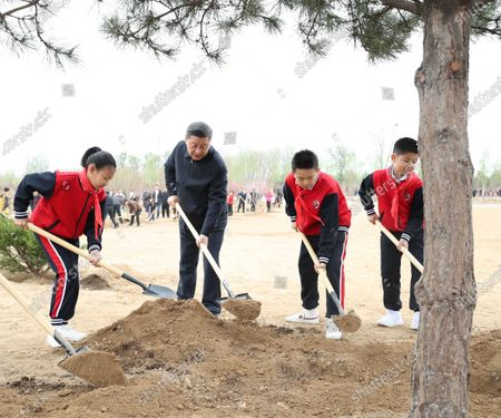 Stock Picture of (210402) - BEIJING, April 2, 2021 (Xinhua) - Chinese President Xi Jinping, also general secretary of the Communist Party of China Central Committee and chairman of the Central Military Commission, plants a tree during a tree-planting activity in Chaoyang District in Beijing, capital of China, April 2, 2021. The activity was also attended by other leaders including Li Keqiang, Li Zhanshu, Wang Yang, Wang Huning, Zhao Leji, Han Zheng and Wang Qishan.